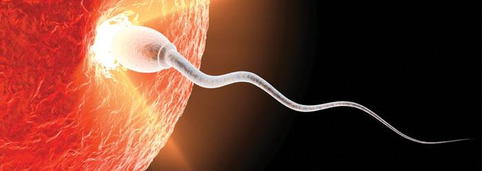 Resultat d'imatges de reproducció humana